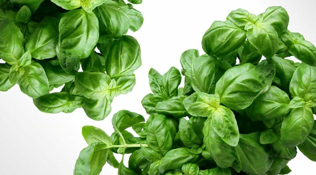 Herbs to heal teeth